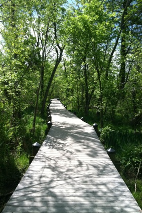 pathway-roosevelt-island-dc